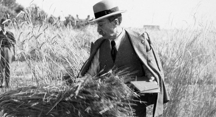 Foto antiche Senator Cappelli