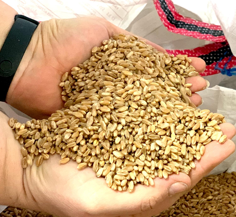 Vendita prodotti biologici cereali e legumi Bio Azienda San Francesco Bio - Maremma Toscana