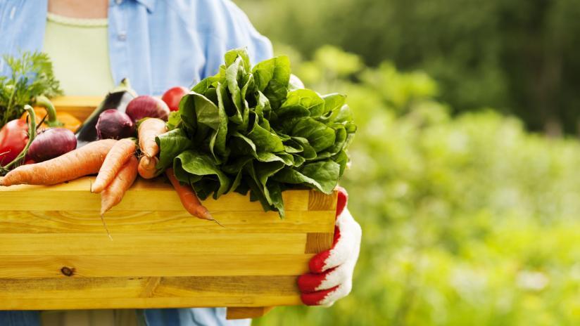 coltivazione cibi biologici san francesco bio